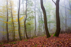 Autumn forrest royalty free stock photography