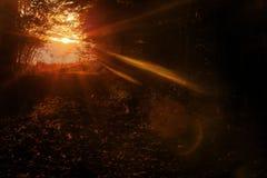Autumn Forrest incantato fotografia stock