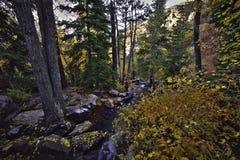 Autumn Forrest Landscape in Utah Royalty-vrije Stock Afbeeldingen