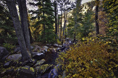 Autumn Forrest Landscape in Utah. Autumn landscape shot in the Lake Blanchet area Royalty Free Stock Images
