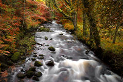 Autumn forrest stream Stock Image