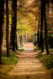 Autumn Forrestpath. In the royal park of Apeldoorn, The Netherlands Stock Photography