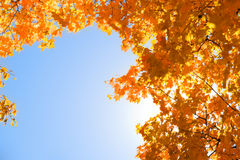 Autumn frame. Blue sky is framed in fall foliage with sun shining through Stock Photography