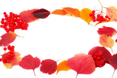Autumn frame. Made out of different autumn leaves and  snowball tree on a white background Royalty Free Stock Photos