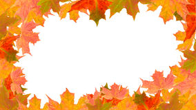 Autumn frame. Autumn leaves in a frame  background Stock Photos