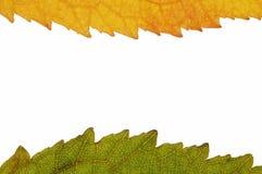 Autumn frame Royalty Free Stock Photos