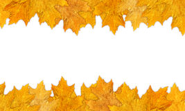 Autumn frame. A beautiful autumn frame with leaves Stock Images