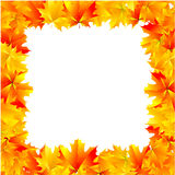 Autumn frame. Nature, over white, vector Stock Photography