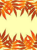 Autumn Frame. Simple and brilliant background of autumn leaves Royalty Free Illustration