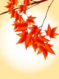 Autumn Frame. Simple and beautiful backdrop of autumn foliage Stock Image