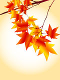 Autumn Frame. Simple and beautiful backdrop of autumn foliage Stock Illustration