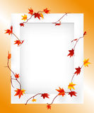 Autumn frame. A simple white frame autumn leaves Stock Photo