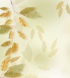Autumn frame. Autumn leaves border over blured background Stock Photography