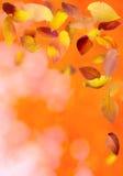 Autumn Frame Royalty Free Stock Image