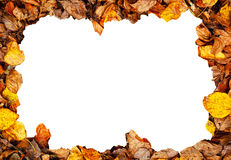 Autumn frame Stock Images