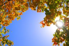Autumn frame. Blue sky is framed in fall foliage with sun shining through Royalty Free Stock Photos