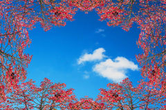 Autumn frame against blue sky. Stock Image