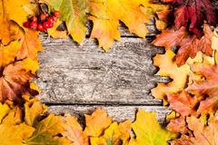 Autumn frame with ashberry Royalty Free Stock Image