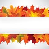 Autumn Frame avec des feuilles Fond de chute avec l'espace de copie Photo stock