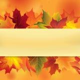 Autumn Frame avec des feuilles Fond de feuille de chute Photo stock