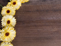 Autumn Frame avec des fleurs Photos stock