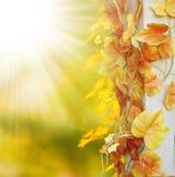 Autumn frame background Royalty Free Stock Photos