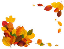 Autumn frame. Beautiful frame of autumn leaves on white background Royalty Free Stock Photo