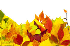 Autumn frame / beautiful real leaves Stock Images
