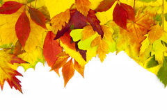 Autumn frame / beautiful real leaves Stock Photos