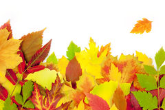 Autumn frame / beautiful real leaves Royalty Free Stock Image