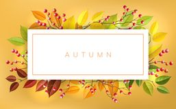 Autumn frame with berry and leaf. Autumn banner frame with red berry and autumn branches and leaf. Horizontal banner with fall colors for nature design and stock illustration
