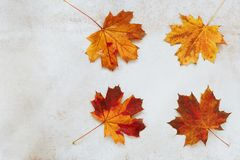 Autumn frame with colorful leaves Royalty Free Stock Image