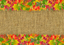 Autumn frame with colorful leaves Stock Photos