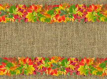 Autumn frame with colorful leaves Royalty Free Stock Photography
