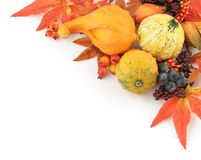 Autumn frame. Colorful pumpkins and autumn decorations on white background stock image