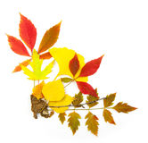 Autumn frame corner / beautiful real leaves Stock Image