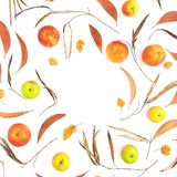 Autumn frame with fall dried leaves, apple fruits on white background. Flat lay, top view. Thanksgiving day. Autumn frame with fall dried leaves, apple fruits on royalty free stock photo