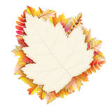Autumn frame with fall leaf. EPS 10. Vector file included Royalty Free Stock Image