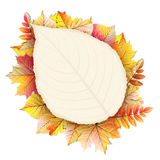 Autumn frame with fall leaf. EPS 10. Vector file included Royalty Free Stock Photos