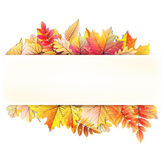 Autumn frame with fall leaf. EPS 10. Vector file included Royalty Free Stock Images