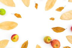 Autumn frame of fall leaves and apples on white background. Thanksgiving day. Flat lay, top view. Autumn frame of fall leaves and apples on white background royalty free stock photography
