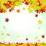 Autumn Frame With Falling Leaves Royalty Free Stock Images