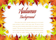 Autumn Frame With Falling Maple Leaves Stock Photo