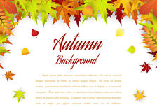 Autumn Frame With Falling Maple Leaves Stock Images