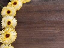 Autumn Frame with Flowers Stock Photos