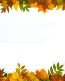 Autumn frame four-fifths Stock Photography