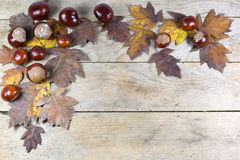 Autumn Frame från kastanjer och bruntsidor på träbakgrund Royaltyfri Bild
