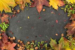 Autumn frame with hazelnuts, cranberry and colorful leaves,  top view, copy space. Royalty Free Stock Photo