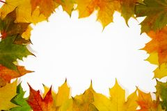 Autumn frame leaves Royalty Free Stock Image