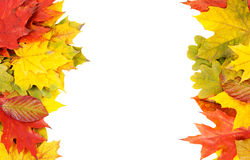 Autumn frame from leaves Royalty Free Stock Images